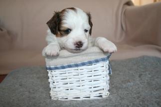 Pup 4 dag 28