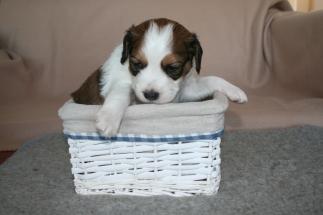 Pup 5 dag 28