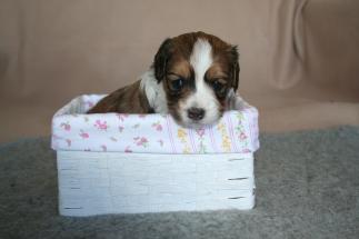 Pup 6 dag 28