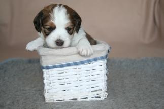 Pup 7 dag 28