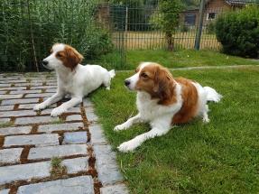 Puppybezoek Casper