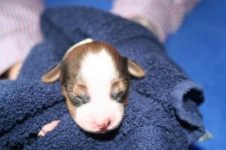 Pup 1 dag 3