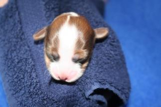 Pup 3 dag 3