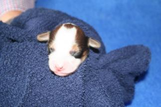 Pup 5 dag 3