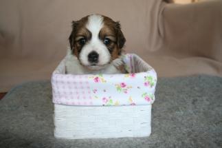 Pup 3 dag 28