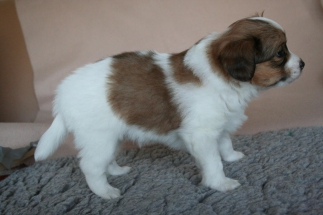Pup 3 dag 35