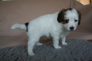 Pup 4 dag 35