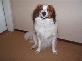 Oscar augustus 2006
