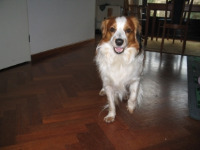 Oscar februari 2005