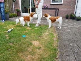 Puppybezoek Chando