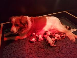 Nest Elektra Geboorte